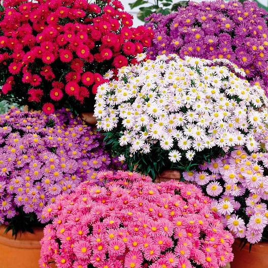 Цветы для тени цветущие все лето